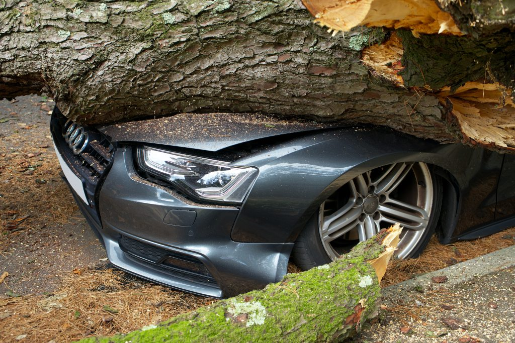 An Audi A3 crushed beneath a tree trunk